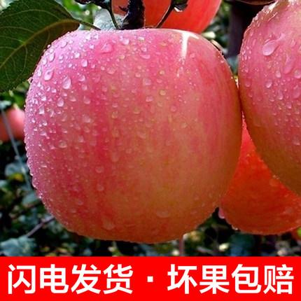 临润山西红富士苹果 5斤 拍下19.9元包邮